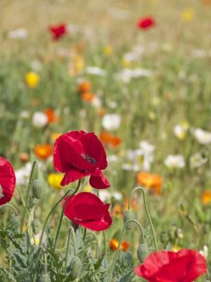 פנאי ואיכות הסביבה – יוצאים לגלות את הטבע