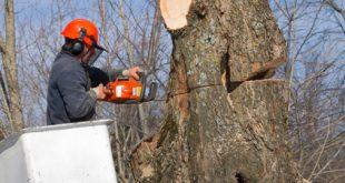 כריתת עץ אסורה על פי החוק