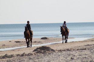 רכיבה טיפולת על סוסים